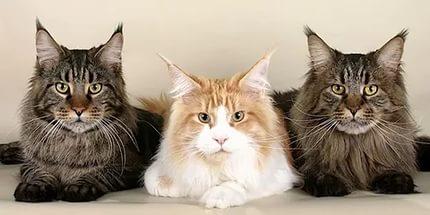 Рейтинг кормов для кошек 2017